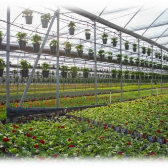 3순위 취업이민 스폰서: Pure Beauty Farm - 구인·구직 - 조지아주닷컴 : Thumbnail - 340x340 커버이미지
