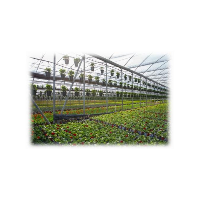 3순위 취업이민 스폰서: Pure Beauty Farm - 구인·구직 - 조지아주닷컴 : Thumbnail - 675x675 커버이미지